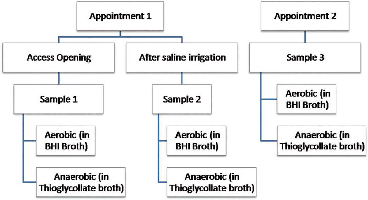 Figure 1: Collection of samples on two consecutive appointments in a patient for aerobic and anaerobic culture