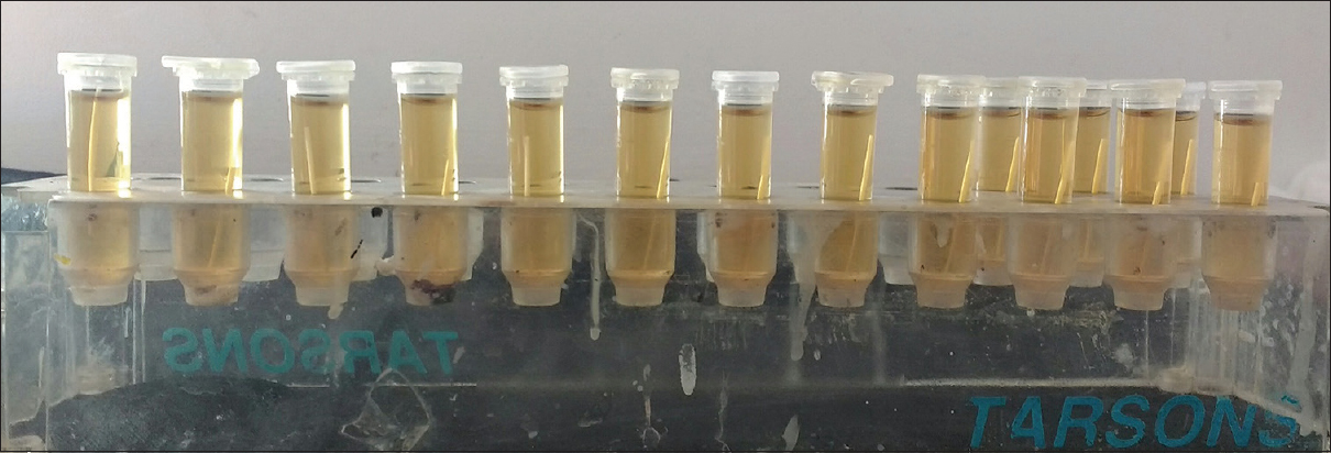 Figure 4: Paper points in Eppendorf tubes containing selected broth